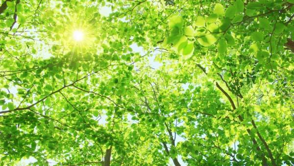 木漏れ日と葉