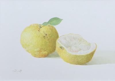柚子の水彩画