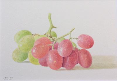 葡萄の水彩画