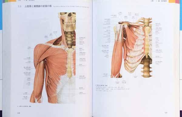 人体解剖学解説書