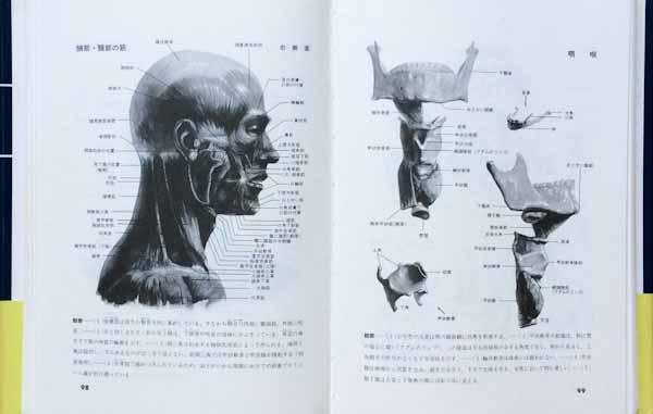 美術解剖書